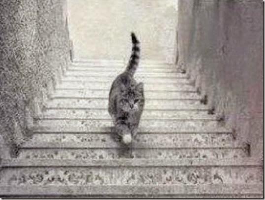 kucing-ini-naik-tangga-atau-turun-tangga_www.dadanpurnama.com_
