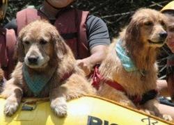 Pets Adventure 8 (56_1) (16)