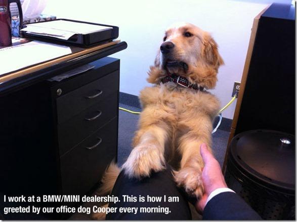 dog-mans-best-friend-27