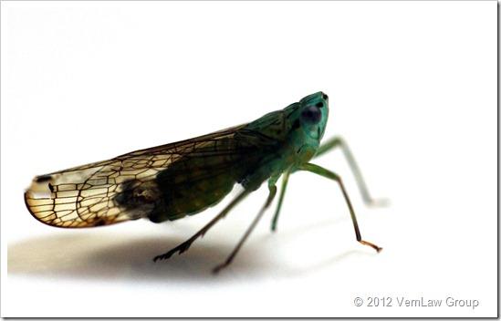 BugPlateIMG_7521