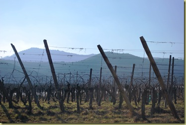 St Hippo wineyards