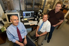 Urs Boelsterli, left,  Winfried Krueger, and Theodore Rasmussen in a stem cell research lab at the Physics/Biology Building on Aug.29, 2012. (Peter Morenus/UConn Photo)