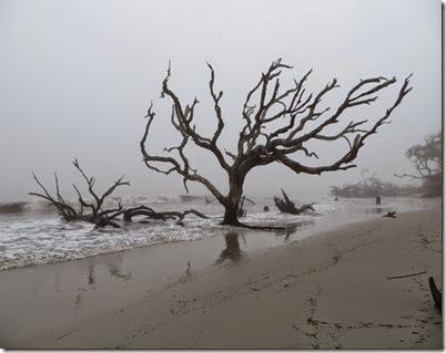 ga_eoy_jekyll_driftwood_beach3