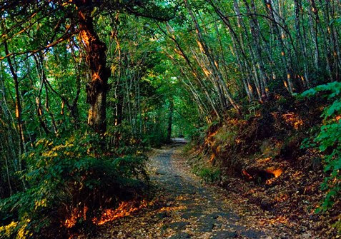 strada bianca nel bosco