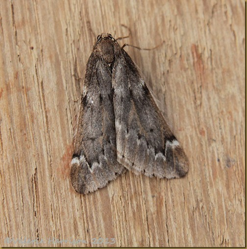 March-moth-1