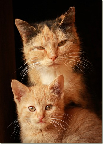 201268_Cat & Kitten_5x7 crop