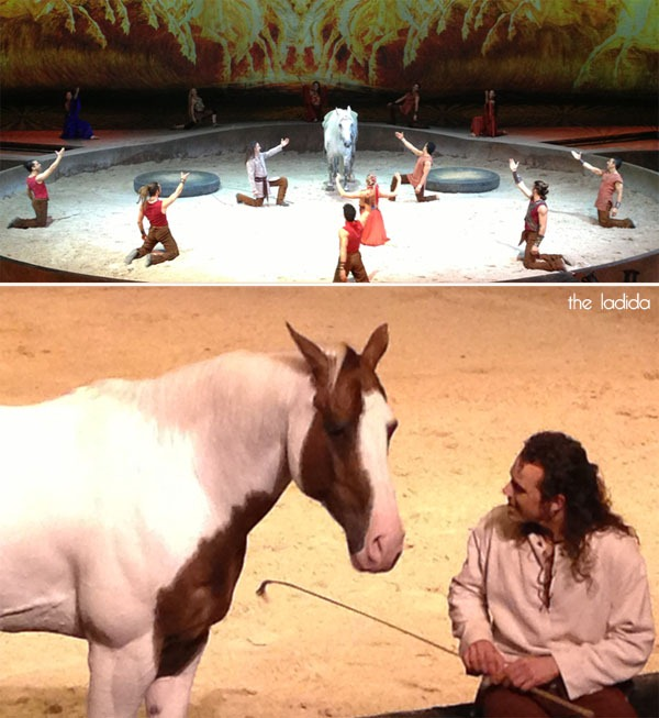 Cavalia Social Media VIP Night Sydney 2013 - Stage