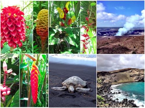 Hawai i 4