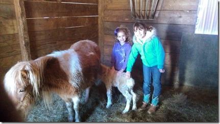 Meghen,Katie,&newFoal03-22-13a