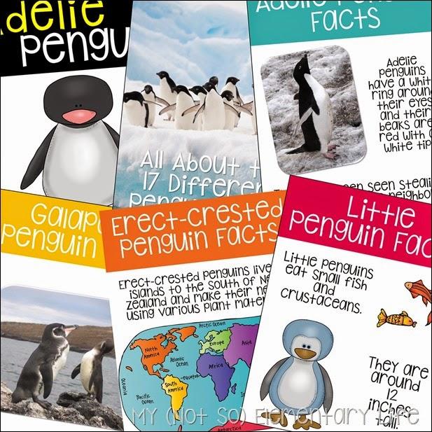 penguin fact pic