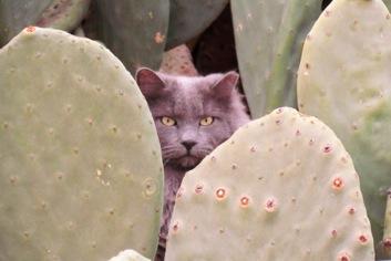 DesertCaballerosMuseum%252526Scenesaroundtown-11-2012-12-29-08-50.jpg