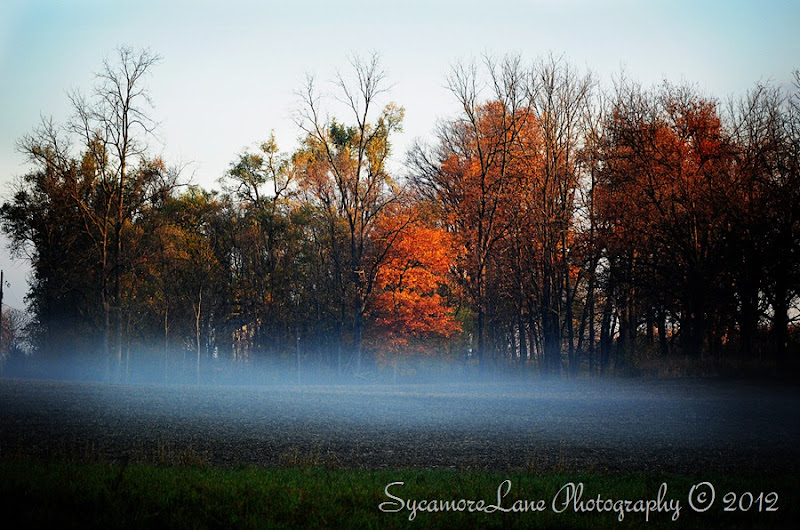 autumn fog-2012-hd