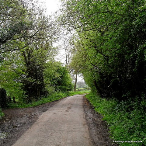 mowsley's leafy lanes