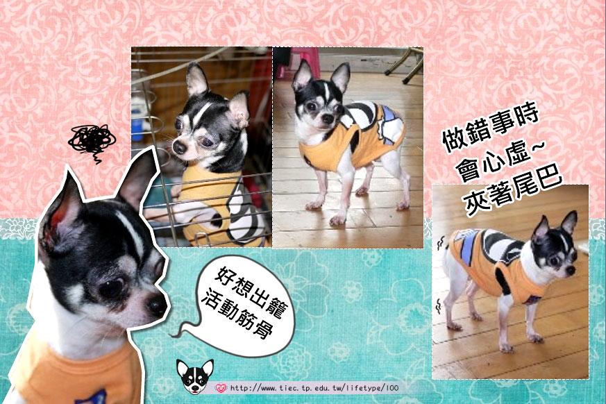 201007minibook-dog06.jpg