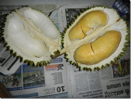 2 Durian D24