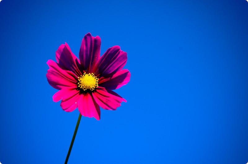 flower-0160
