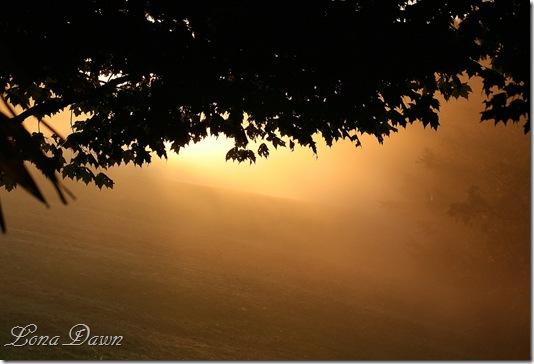 Sunrise_Fog2_2011