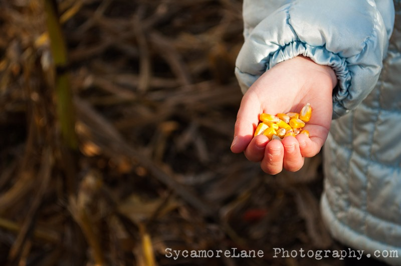 SycamoreLane Photography--7-3