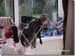 clothes horse cat
