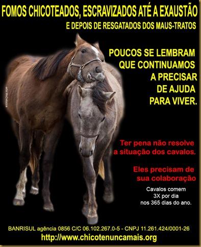 cavalos_esquecidos
