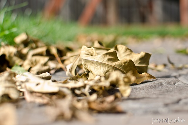 Fall leaves photography   personallyandrea.com