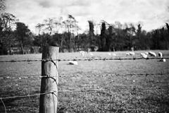 Spring-Fields-3