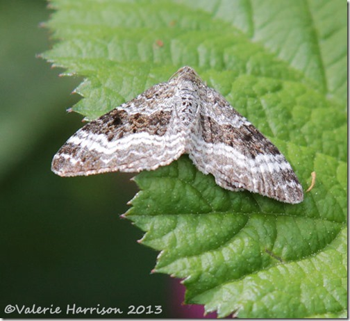10-common-carpet