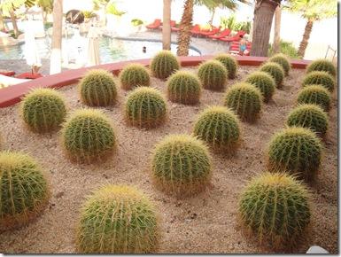 7.  Cactus Balls