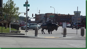 Driving the Custer Loop 016