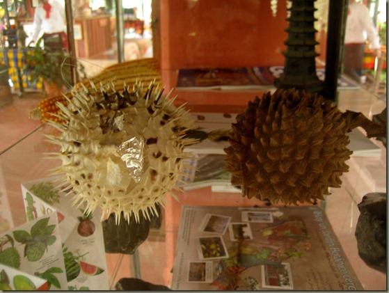 Juxtaposition of spiky spheroids