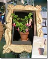 framed fuchsia