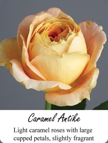 Caramel green valley floral grower