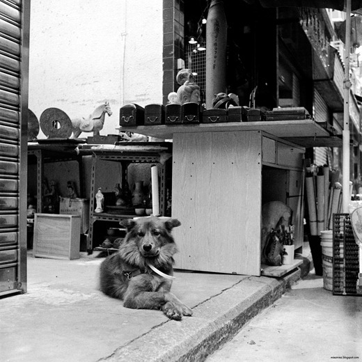 macau_antique_dog