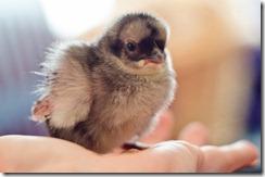 ChicksNewMay4-9147