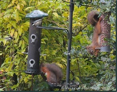 2-squirrels