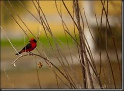 LL - bird