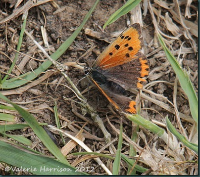47-small-copper
