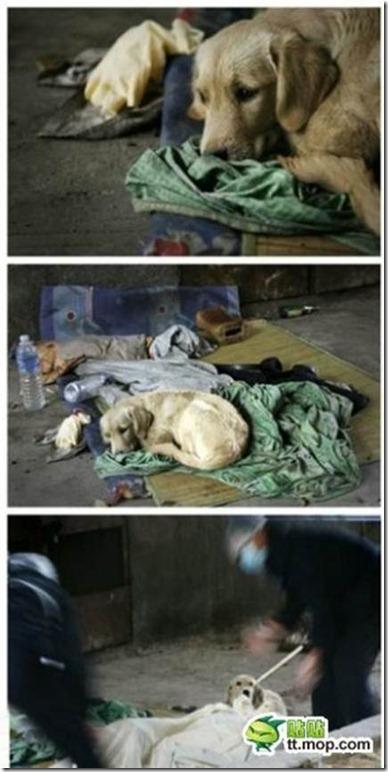 狗狗是人類最好的朋友