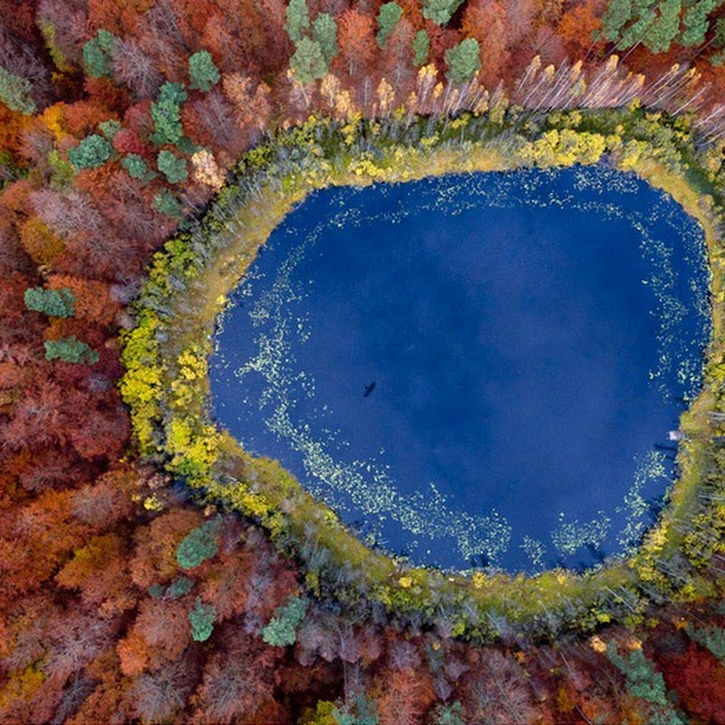 Kacper Kowalski's Aerial Photos of Poland's Forests in Autumn