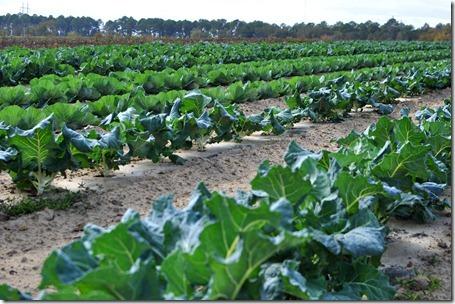 fall produce 1112 (13)