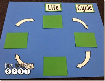 Making Interactive Life Cycle Posters
