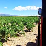 mallorca-wine-express-05.jpg