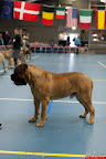 20130510-Bullmastiff-Worldcup-0274.jpg