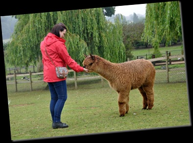 Christina feeding Alpaca (resized) DSC_1150