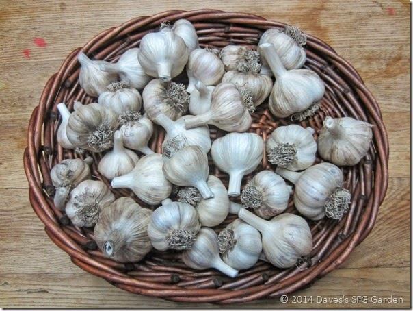Spanish_Rioja_garlic
