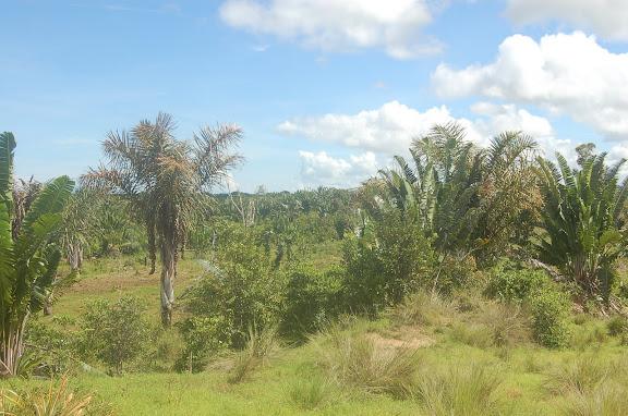 Paysage de Savane entre Diego Suarez et Majunga (côte nord-ouest de Madagascar), 6 février 2011. Photo : T. Laugier