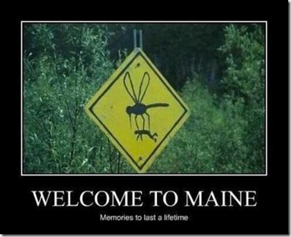 Maine mosquitos