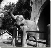 動物園大象