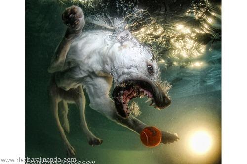 caes subaquaticos desbaratinando  (7)