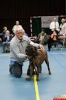 20130510-Bullmastiff-Worldcup-0270.jpg